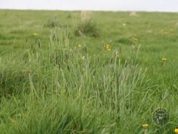 BOT LLP Wildflowers Grasses 11