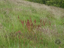 BOT LLP Wildflowers Grasses 16