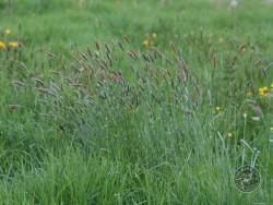 BOT LLP Wildflowers Grasses 19