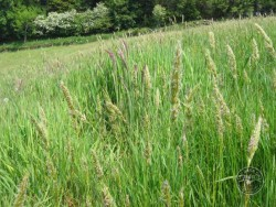 BOT LLP Wildflowers Grasses 20