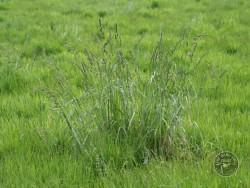 BOT LLP Wildflowers Grasses 21