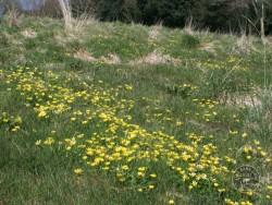 BOT LLP Wildflowers Grasses 26