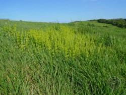 BOT LLP Wildflowers Grasses 27