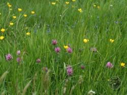 BOT LLP Wildflowers Grasses 30