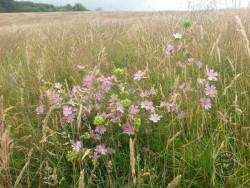 BOT LLP Wildflowers Grasses 32