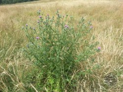 BOT LLP Wildflowers Grasses 33