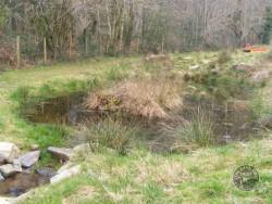 LLP Wildlife Pond Creation 14