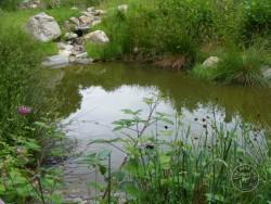 LLP Wildlife Pond Creation 15