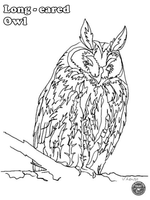 Long Eared Owl Coloring Page