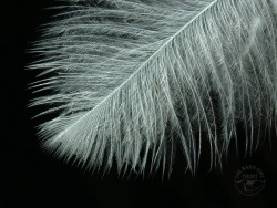 Owl Feather Wallpapers high resolution