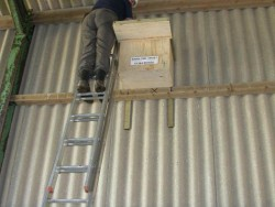Suitable Positions Barn Owl Indoor Nestboxes 01