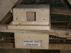 Suitable Positions Barn Owl Indoor Nestboxes