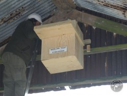 Suitable Positions Barn Owl Indoor Nestboxes 09