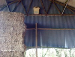 Suitable Positions Barn Owl Indoor Nestboxes 12