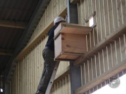 Suitable Positions Barn Owl Indoor Nestboxes 14