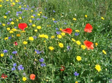 Winter Bird Crop Flowers LLP Wildlife Diary June 2018