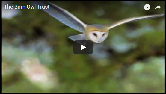 About The Barn Owl Trust Video
