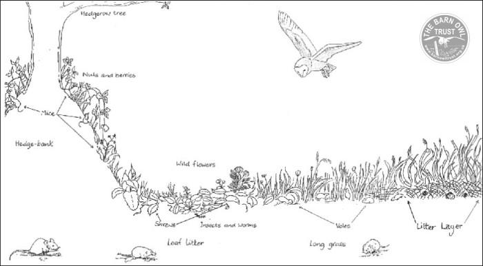 diagram archives the barn owl trustbarn owl habitat