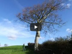 Best Tree For Owl Nestbox Video