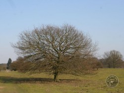 Choosing Right Tree For Nestbox 05