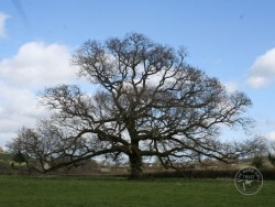 Choosing Right Tree For Nestbox 11
