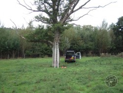 Choosing Right Tree For Nestbox 15