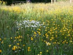 Flowers Of Rough Grassland 1