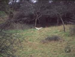 Good Barn Owl Habitat 02