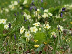 Lennon Legacy Project Wildflowers 1