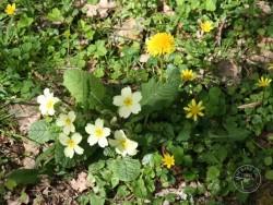 Lennon Legacy Project Wildflowers 3