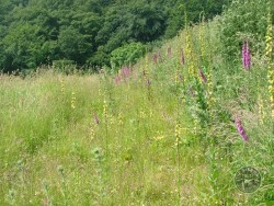 Lennon Legacy Project Wildflowers Dark Mullein Foxglove 2