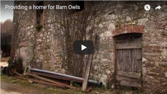 Owl Homes Video