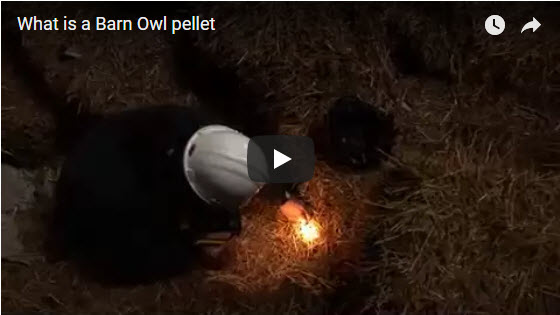 Owl Pellets Video