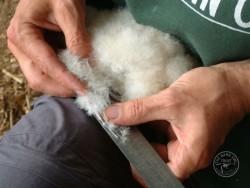 Owl Ringing BTO Measuring Melanie Lindenthal