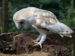 Owls In Barn Owl Trust Sanctuary 03 Lucy Flatman