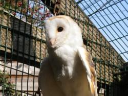 Owls In Barn Owl Trust Sanctuary 05
