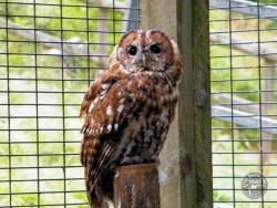 Owls In Barn Owl Trust Sanctuary 09 Paul Stratton