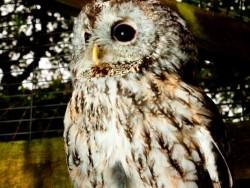 Owls In Barn Owl Trust Sanctuary 13 Sebastian Bevan
