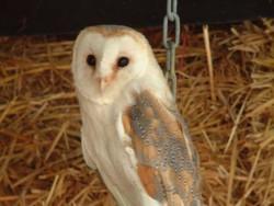 Owls In Barn Owl Trust Sanctuary 14