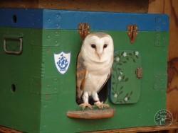 Owls In Barn Owl Trust Sanctuary 16