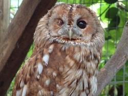 Owls In Barn Owl Trust Sanctuary 18