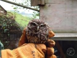 Owls In Barn Owl Trust Sanctuary 20