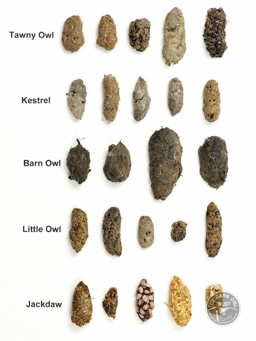 Nearly All Birds Produce Pellets The Appearance Depends