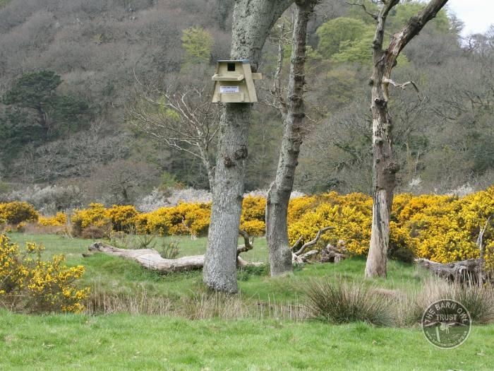 Tree Nestboxes Erected Treebox