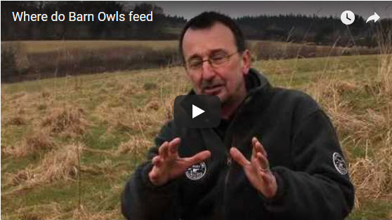 Where Do Barn Owls Feed Video