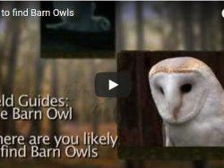 Owl videos