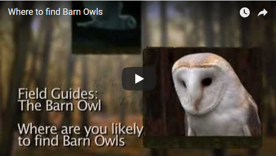 Where Do Owls Live Video